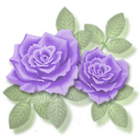 Rose_c06w