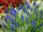 Flower12a