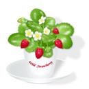 Artwildstrawberry01300w