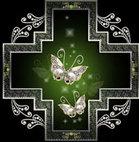Butterfly_scho_2