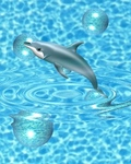 dolphin-wave1