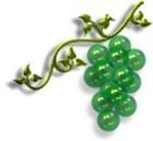 Jewelgrape5_1
